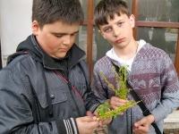 Връзване върбички и здравец за Цветница 2012_28
